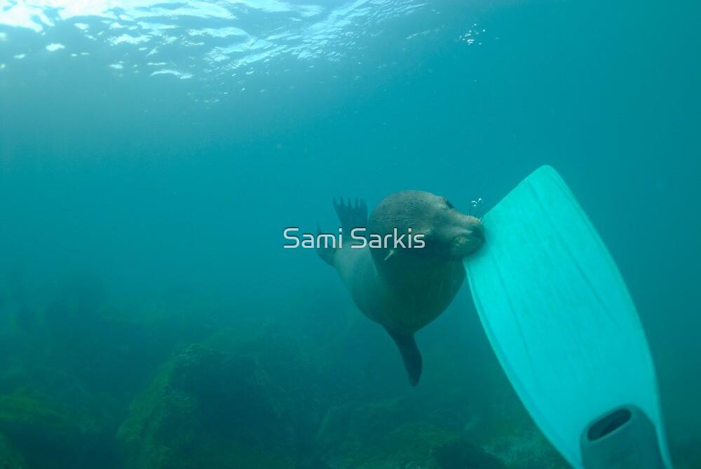 Sea lion biting a diver flipper, Underwater by Sami Sarkis