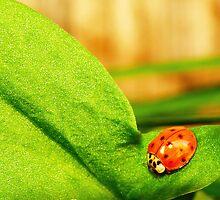 LadyBug by Sian Houle