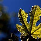 moonlight leaf by yvesrossetti