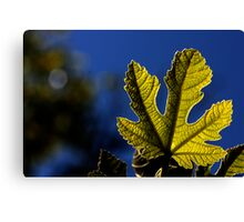 moonlight leaf Canvas Print