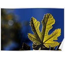 moonlight leaf Poster