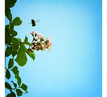 bee with me Photographic Print