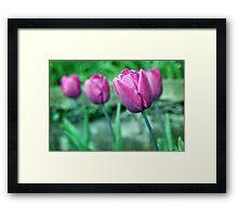 Blue Ribbon Tulips Framed Print