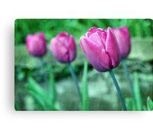 Blue Ribbon Tulips Canvas Print