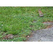 Jack and Bunny Rabbit Photographic Print
