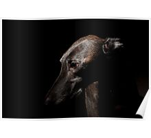 Pensive Greyhound Poster