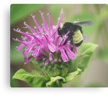Bee Balm and Bumble Metal Print