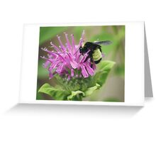 Bee Balm and Bumble Greeting Card