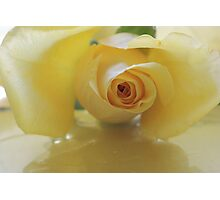 Burst of Sunshine ~ Yellow Rose Photographic Print