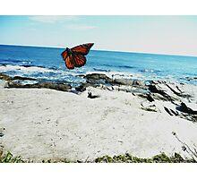 Monarch Photographic Print
