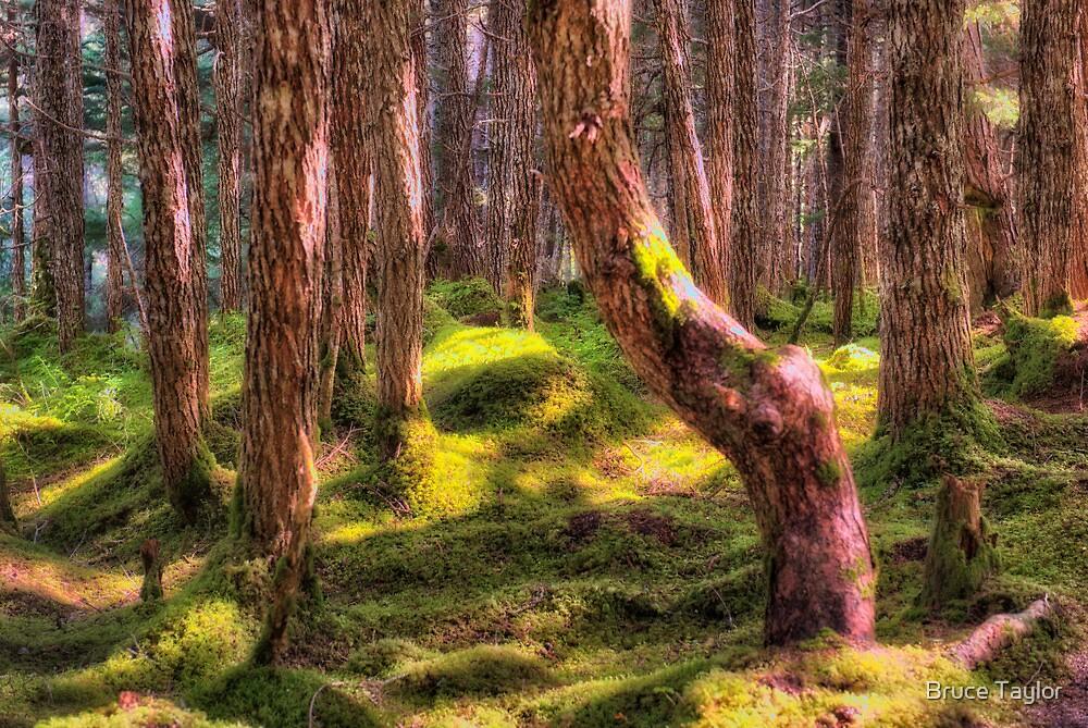 Alaska Rainforest by Bruce Taylor