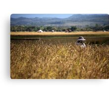 Farm worker in the rice paddy in Chiang Rai, Thailand, after a hard days graft. Canvas Print
