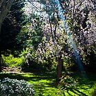 Enchanted Back Yard by JackP