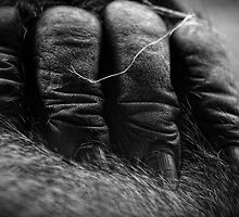 Gorilla Fingers by Dana Horne