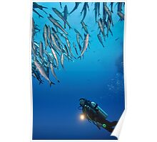 Scuba Diver shining torch by a  school of fishes Poster