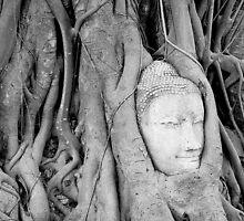 Buddha's Head in Bodhi Tree by fernblacker
