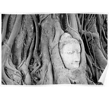 Buddha's Head in Bodhi Tree Poster