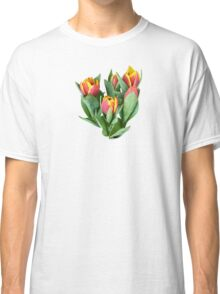 Tulips Just Opening Classic T-Shirt