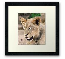 I am watching you,come closer at your own risk! Framed Print