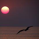Sunset's Bird - Pajaro De La Puesta Del Sol by Bernhard Matejka