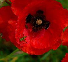 Opium Denizens by GuyAmazed