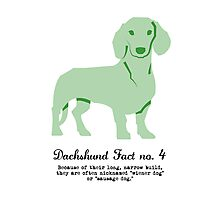 Dachshund Fact no. 4 Photographic Print