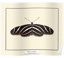 Zebra Longwing Butterfly - Specimen style print Poster