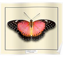 Common Lacewing Butterfly - Specimen style print Poster
