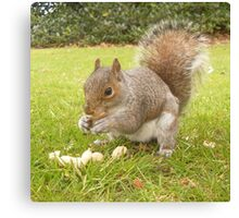 Hungry Squirrel. Canvas Print
