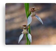 Bunny Orchid Canvas Print