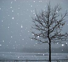 Snow Tree by ceWOLFE