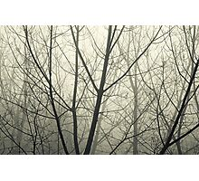 the fog Photographic Print