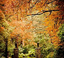 Autumn awaits, come home... by Nayomi Wijeratne