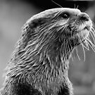 Asian small-clawed otter (Aonyx cinerea) by Steve  Liptrot