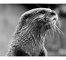 Asian small-clawed otter (Aonyx cinerea) Photographic Print