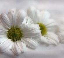White on White by Julesrules