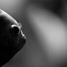 A fishy profile by Darren Bailey LRPS