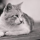 Cat by lrenato