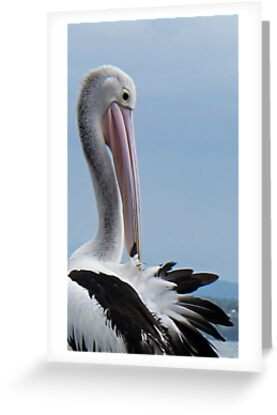 the pelican by Anne Scantlebury