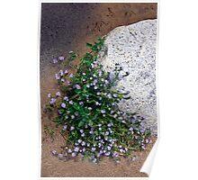 Wild Blue in the Desert Poster