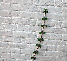 The Wall Crawler  by John  Kapusta