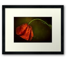Sun after rain... Framed Print