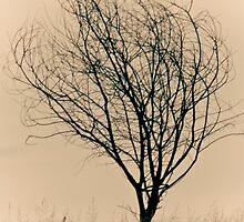 Alone by Marianne Ellis