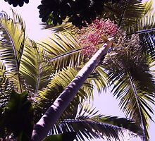 Palm Trees by AHakir