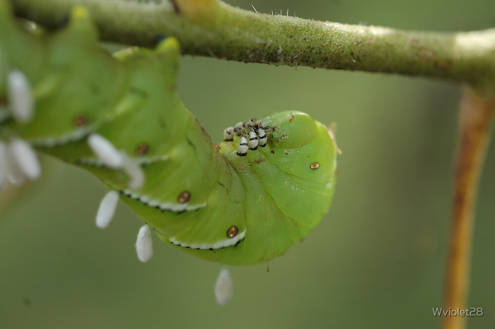 Caterpillar with Attachments  by Wviolet28