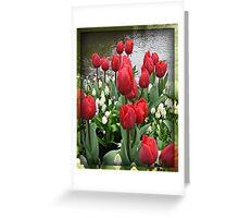 Velvety Red Tulips and White Muscari - Keukenhof Gardens Greeting Card