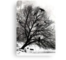 Winter Crows Canvas Print