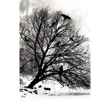 Winter Crows Photographic Print