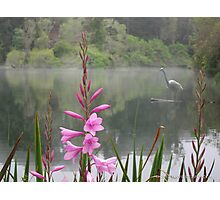 Pink Flower and the Heron Photographic Print
