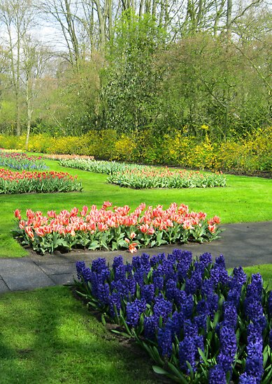 Colourful Beds of Hyacinths and Tulips - Keukenhof Gardens by kathrynsgallery
